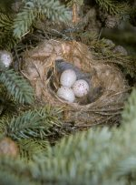 nest with eggs.